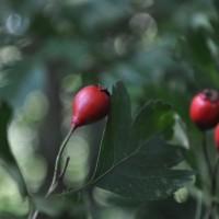 glog_owoc