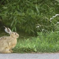 rabbit-1455058__340